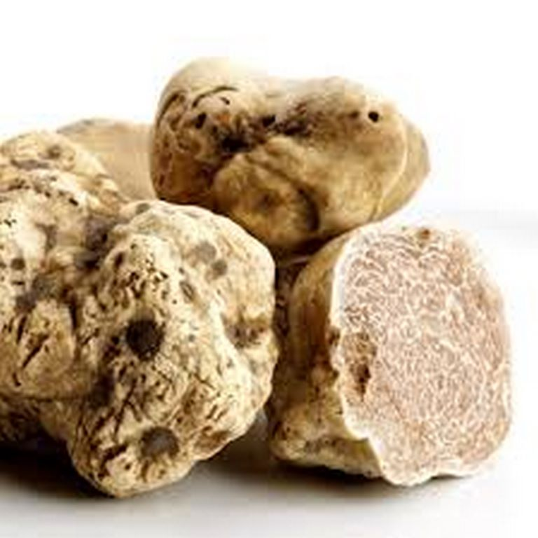 tartufo(Copia)